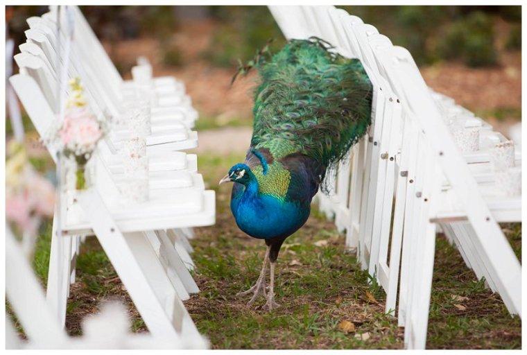 wedding_peacocks