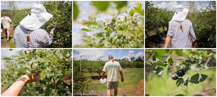 Blueberry picking Eustis
