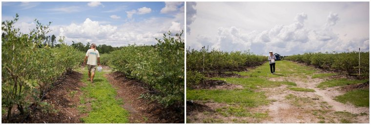 Umatilla Blueberry farms